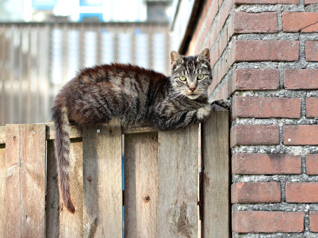 straatkat-huissen