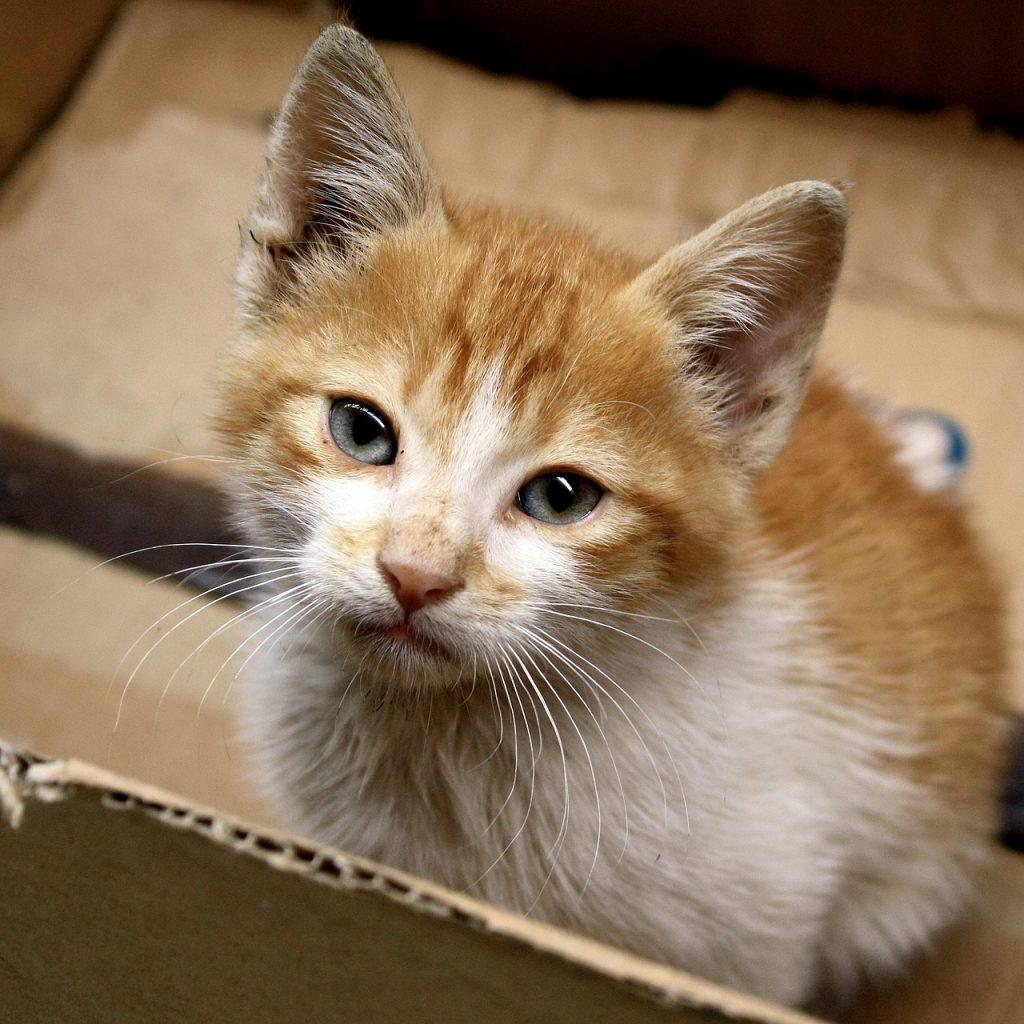 cat-1072241_1280