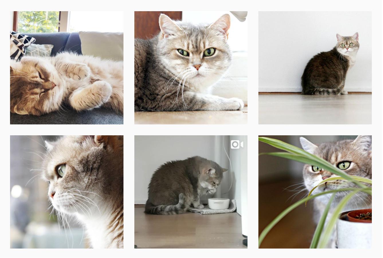 Instagram account voor je kat