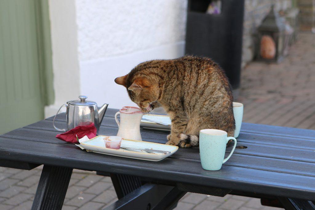 Poezenweetjes | Een kat straffen met de plantenspuit?! - mevrouwmiauw.nl