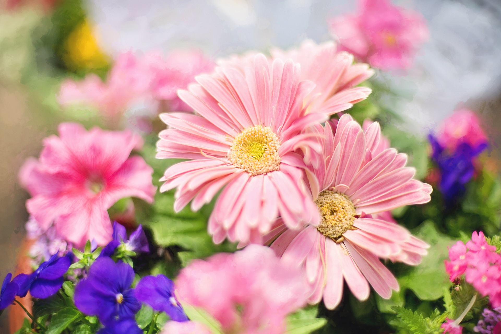 spring-flowers-745721_1920