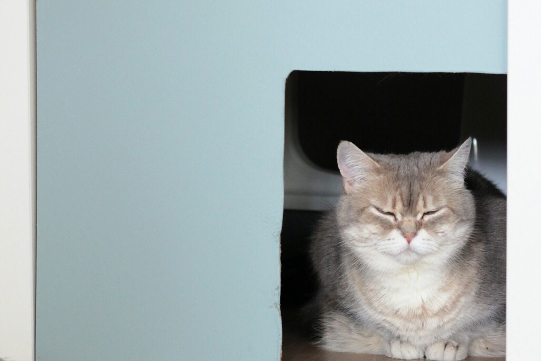 Kattenbak hack | Kattenbak verbergen