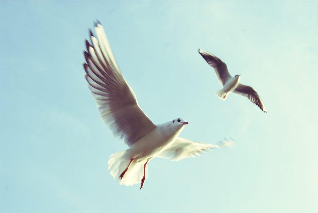 Vrijheid | Ik voel me vrij als..