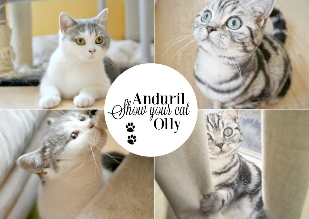 Show Your Cat(s) | Anduril & Olly