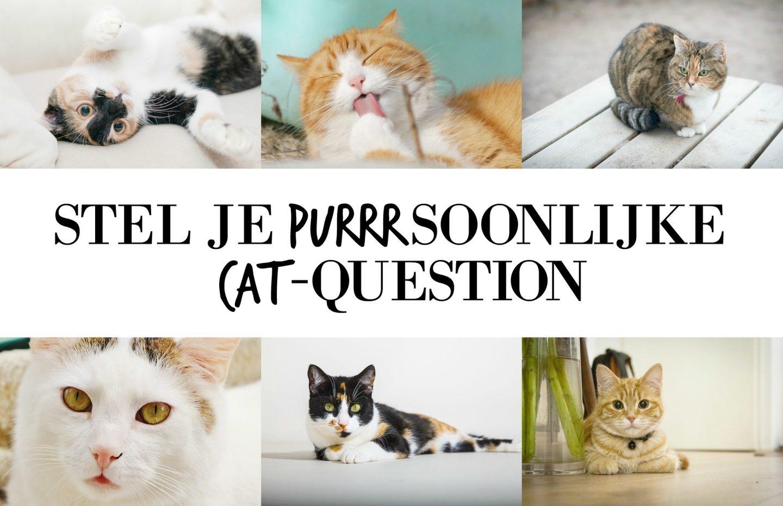 Stel je purrrsoonlijke cat-question