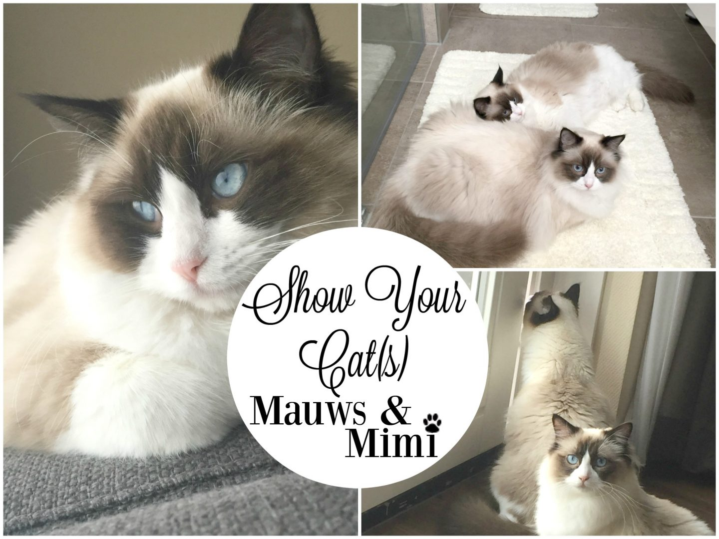 Show Your Cat(s)   Mauws & Mimi