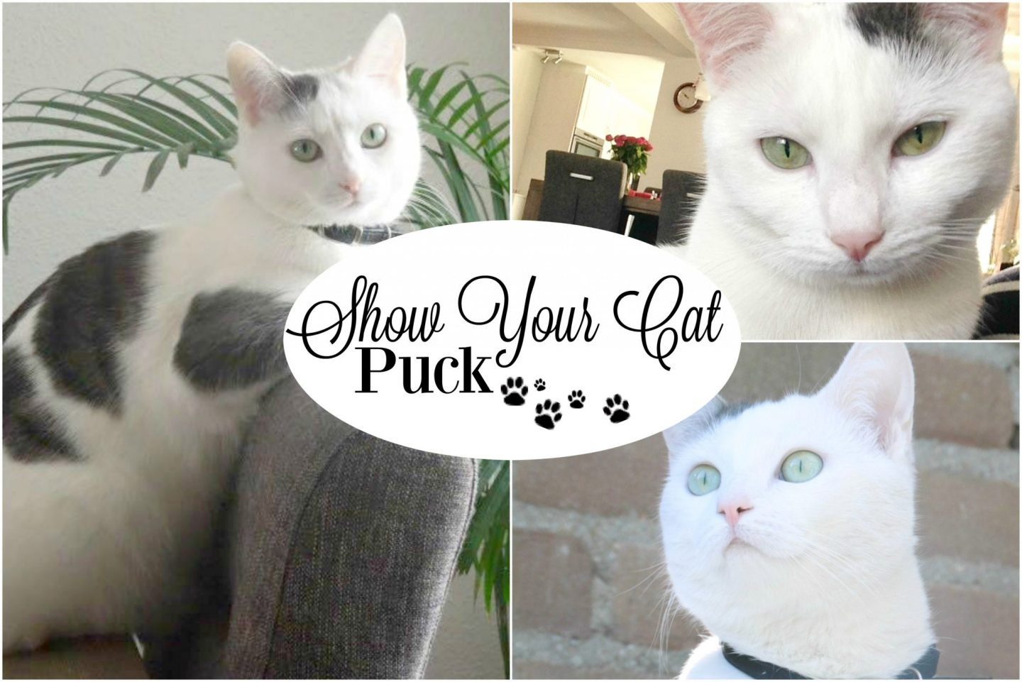 Show Your Cat | Puck