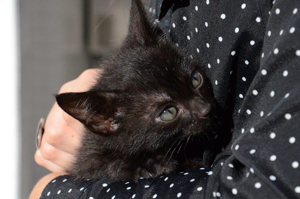 cat-1739237_1920