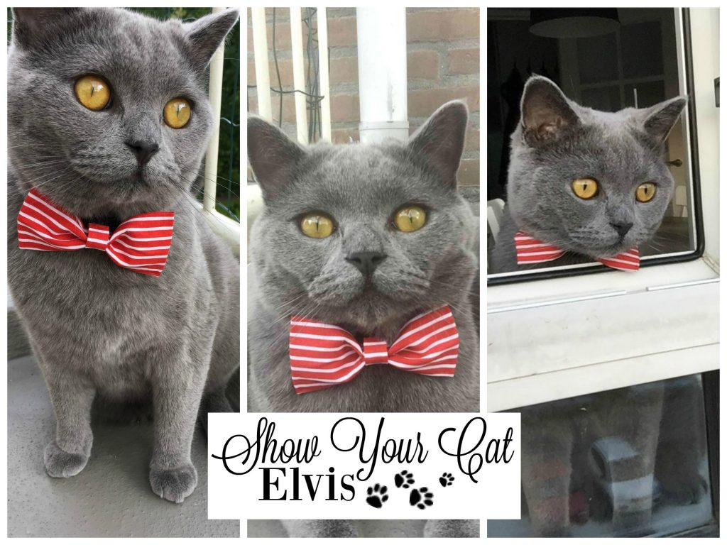 Show Your Cat | Elvis