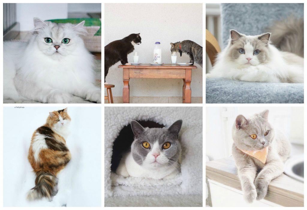 Katten op Instagram | Favoriete Instacats #4