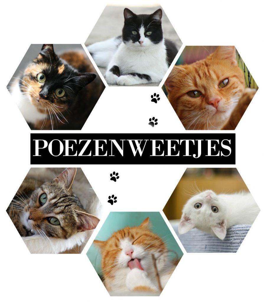Poezenweetjes | Een kattenkamer: wel of geen goed idee?