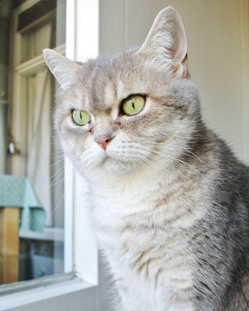 Catparents taal   Woorden die catparents graag gebruiken