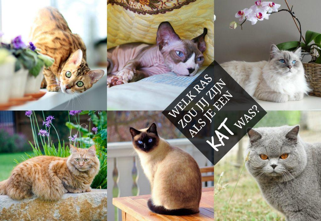TEST: welk ras zou jij zijn als je een kat was?