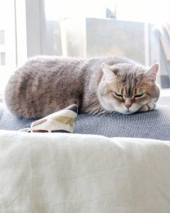 Katten En Feestdagen Fijne Feestdagen Voor Vlinder Mevrouwmiauw Nl