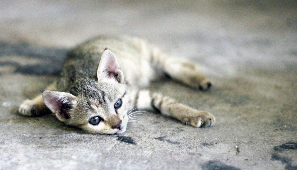 Poezenweetjes | Alles wat je moet weten over katten met warm weer