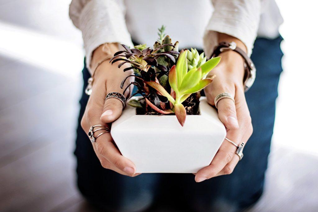 5x Planten op mijn wishlist