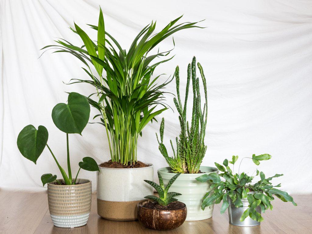 5x mijn favoriete plantjes