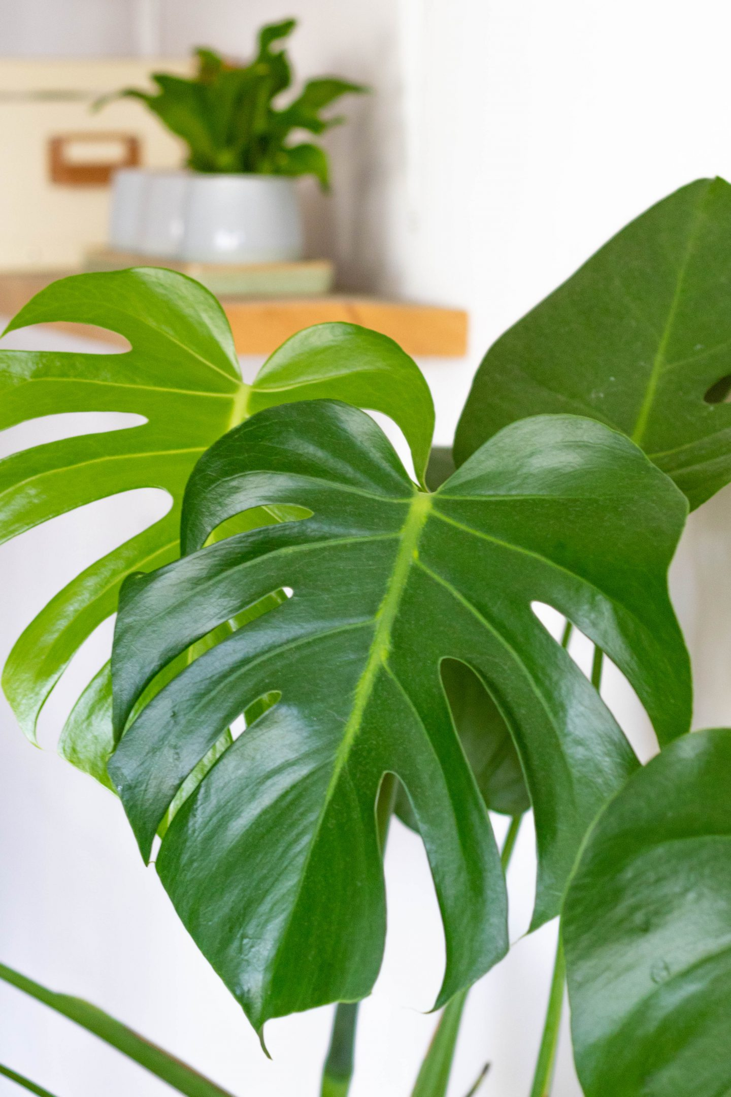 3x wat ik zo leuk vind aan het verzorgen van mijn planten