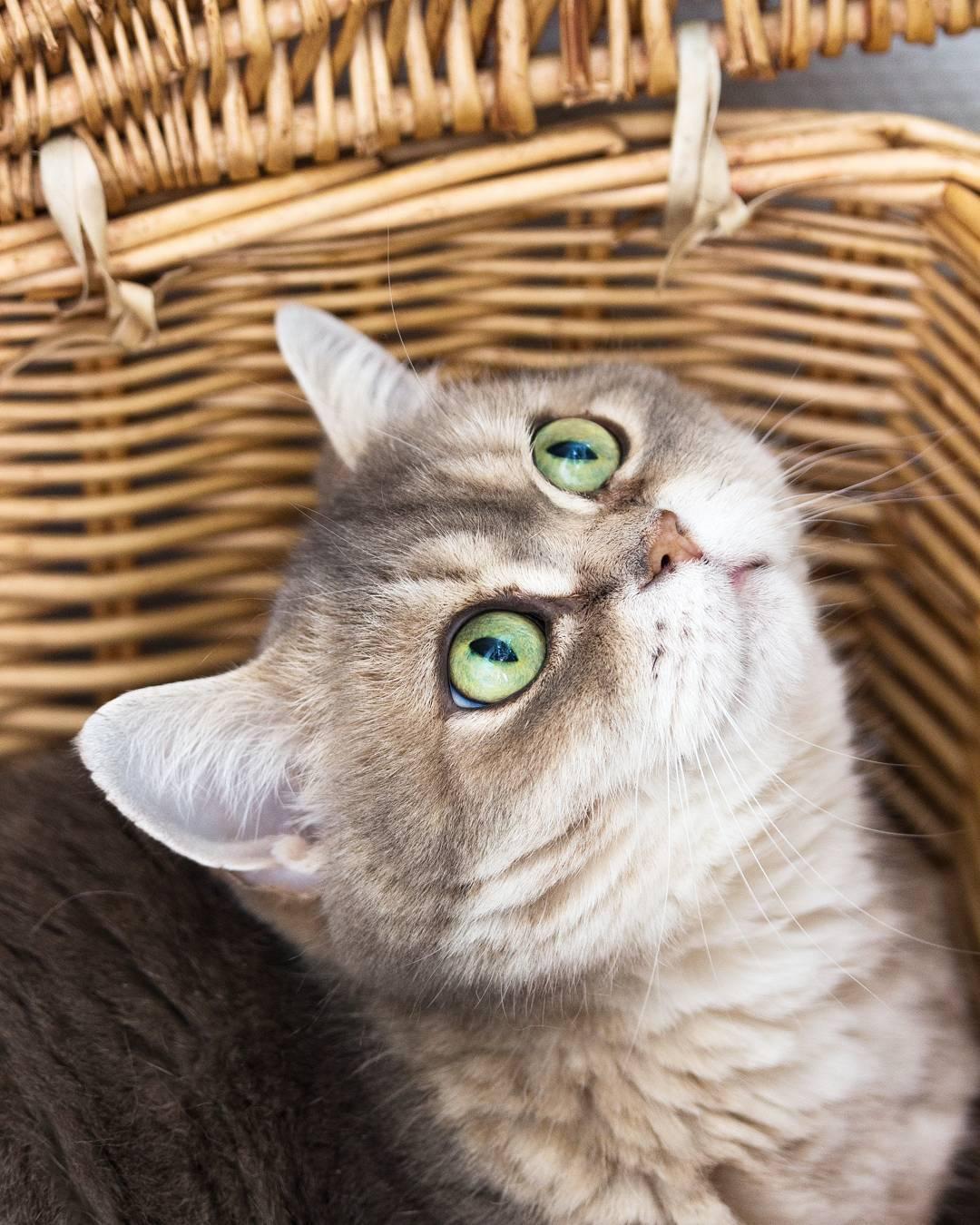10x mijn favoriete kattenfoto's van Vlinder