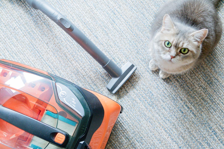 Kattenharen verwijderen met een Thomas stofzuiger