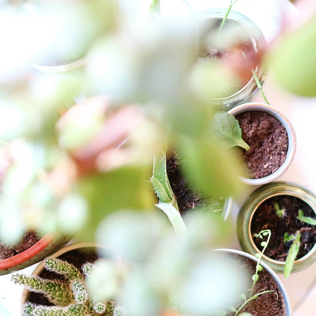 Duurzame planten? Stekjes ruilen en vragen!